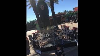 Matt's playtime.  First time to Busch Gardens Tampa