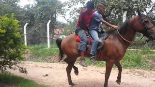 Cavalo Pulando Com Dois Cara Na Garupa