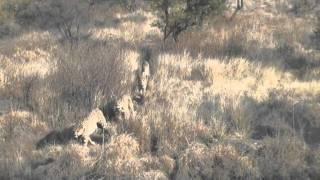 Faszination Afrika (englischer Trailer)