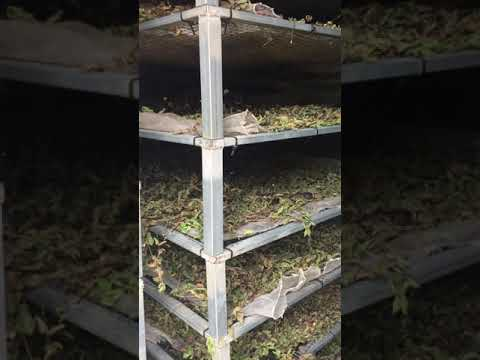 Portugal Organic Herbs Tour