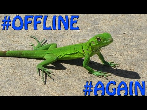 Brace Yourselves...The Lizard Squad Is Back