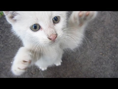 Kittens meow eating food and plays with each other