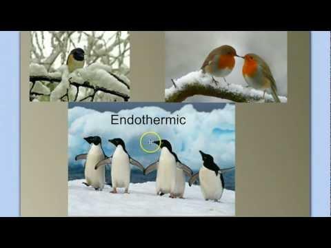 Vertebrate Diversity: The Birds