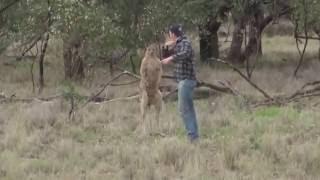 Man vs.Kangaroo (Hombre vs. Canguro).