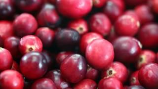The Cranberries - Zombie (instrumental, karaoke)