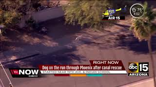 Dog rescued from Phoenix canal, runs off