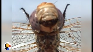 Dragonfly Does The CUTEST Dance To Get Clean