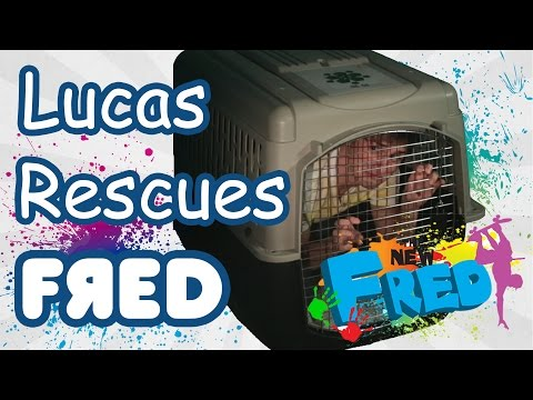 Lucas Rescues Fred