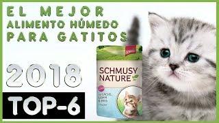 El mejor 🔥 Alimento Húmedo para Gatitos 😸 TOP-6 🔥