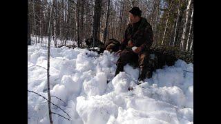 Охота на медведя с ВСЛ.