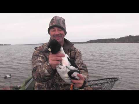 Diver Duck Action, Hand Carved Decoys And Great Dog Retrieves!