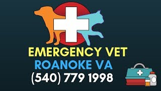 Emergency Veterinary Roanoke VA | Emergency Veterinary Hospital Roanoke VA | (540) 770 1998