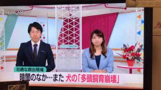 長崎でまた多頭飼育崩壊