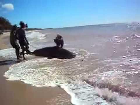 flagras na praia xexo