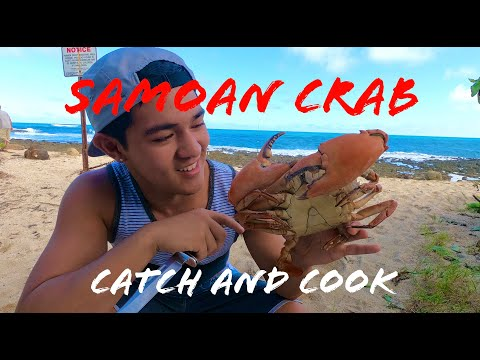 HUGE MUD CRAB + KAYAKING IN THE OCEAN - CATCH AND COOK