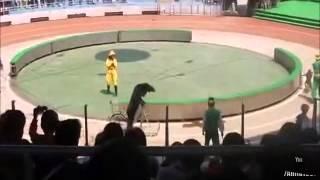 Bear before he eats monkey riding bike in China