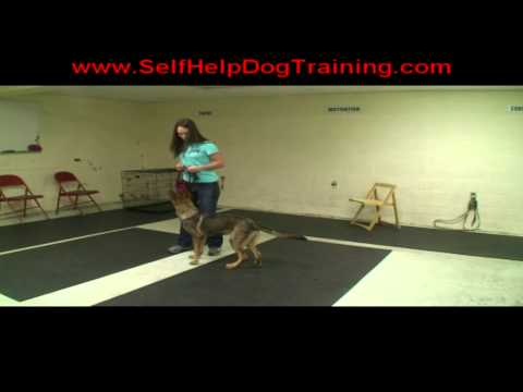 Get Dressed Command for Dog Training at k9-1.com