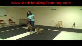 Get Dressed Command For Dog Training At K9-1.com