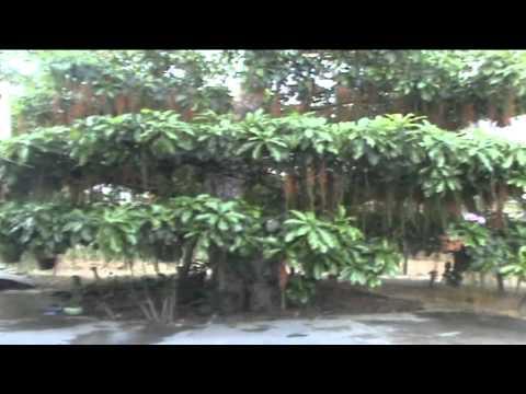 Loc vung co thu Hue