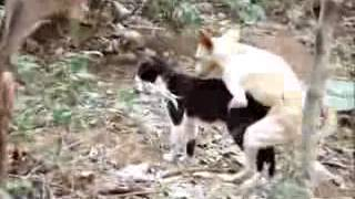 Mating of dog and a cat, sire and dam