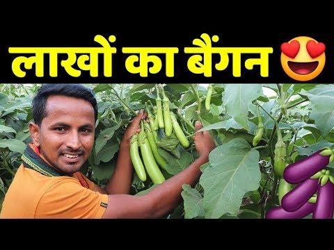 मालामाल बैंगन🍆🍆Profit, Marketing, Variety, Harvesting | Brinjal - Eggplant Farming A To Z