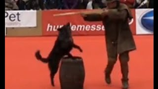 Dogdance Turnier Winterthur 2015 - Plinio Forras Classe 3 - 4mes
