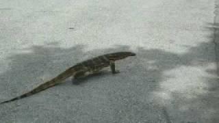 バンコクのルンピニ公園のオオトカゲ さすがはタイランド、誰も気にして...