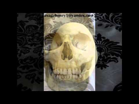Real human skulls and human skeletons for sale
