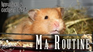 Ma ROUTINE rongeurs [Melo]