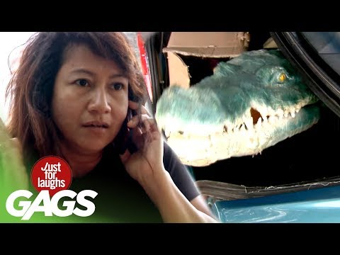 Alligator Attack Caught on Tape - Just For Laughs Gags
