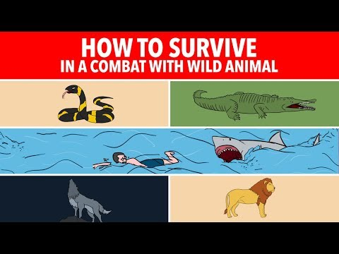 10 Tips How to Survive with Wild Animal Attacks