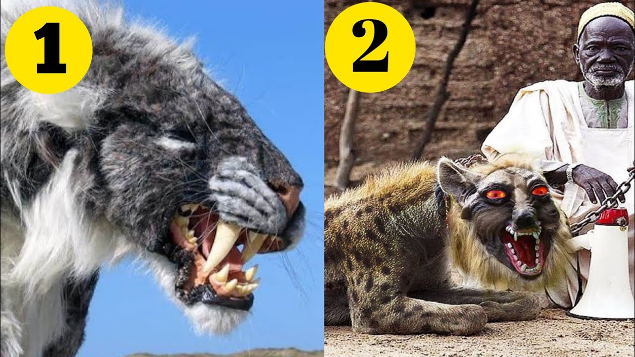 Top 10 Dangerous Animals In Pakistan | Top 10 Dangerous Animals In The World | Emotional Reader