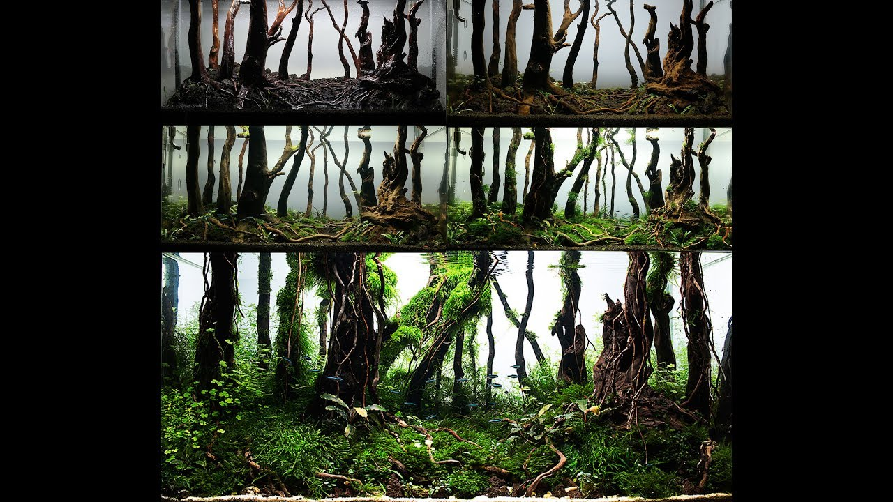 My Forest Nature Aquarium Aquascape - Step By Step - YouTube