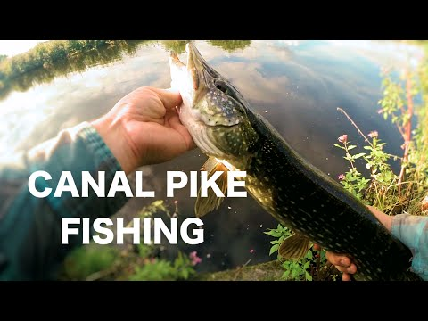 EPIC Canal Pike Fishing With Lures - UK Lure Fishing - Vlog