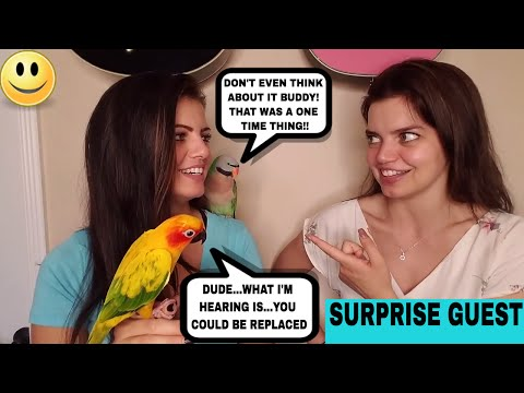 My Mustache Parakeet Ate My Keyboard So My Sister Blamed My Dad Surprise guest  STORY TIME SUNDAY