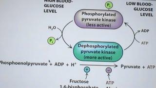 Ahern s Biochemistry #23 Glycolysis & Gluconeogenesis
