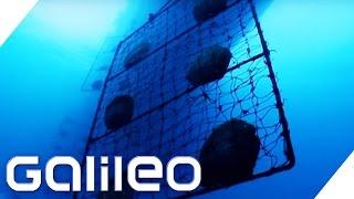 Die teuersten Perlen der Welt | Galileo | ProSieben