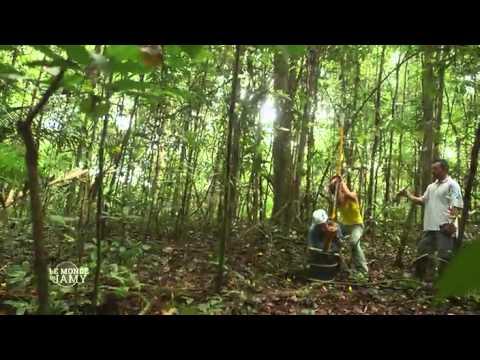 Le monde de Jamy - extrait -Jardins suspendus de la canopée