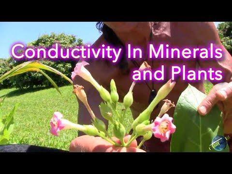 Dr. Robert Cassar Conductivity In Plants And Minerals