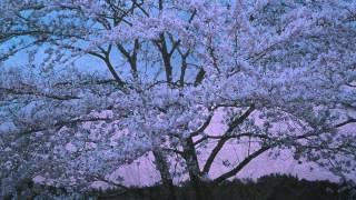 夢桜~愛しき桜、愛おし桜~