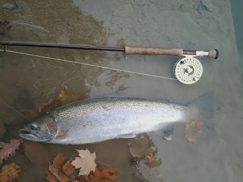 Cattaraugus Creek Steelhead 10/13/12