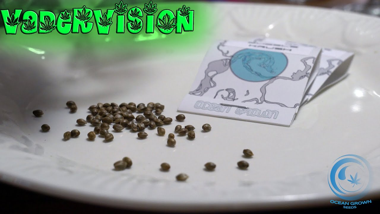 introduction to germination seed