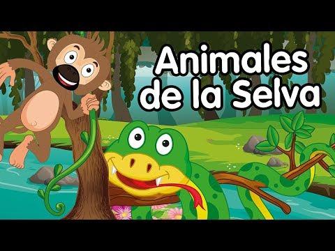 Animales De La Selva Canciones Infantiles Youtube