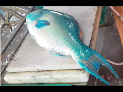 How To Fillet Parrot Fish, Fish Market. Jeddah, Saudi Arabia