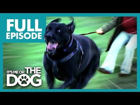 The Dogs That Walk Their Owners: Toadie and Smartie | Full Episode | It's Me or The Dog