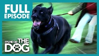 Download The Dogs That Walk Their Owners: Toadie and Smartie | Full Episode | It's Me or The Dog Mp3 and Videos
