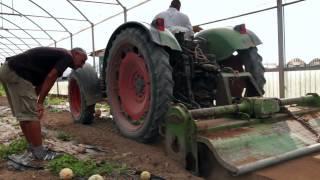 Produzione moderna di verdure e tradizione: Una giornata con gli agricoltori di Ortosole (IT)