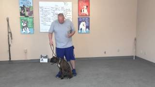 Ptsd Service Dog Training- 801-895-2731