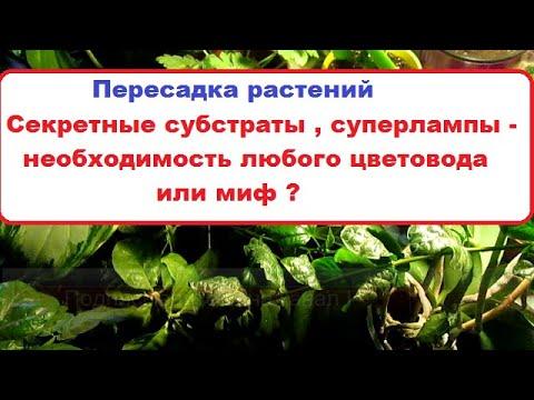 Пересадка растений //Секретные  субстраты , суперлампы и т. д .-   необходимость цветовода или миф ?