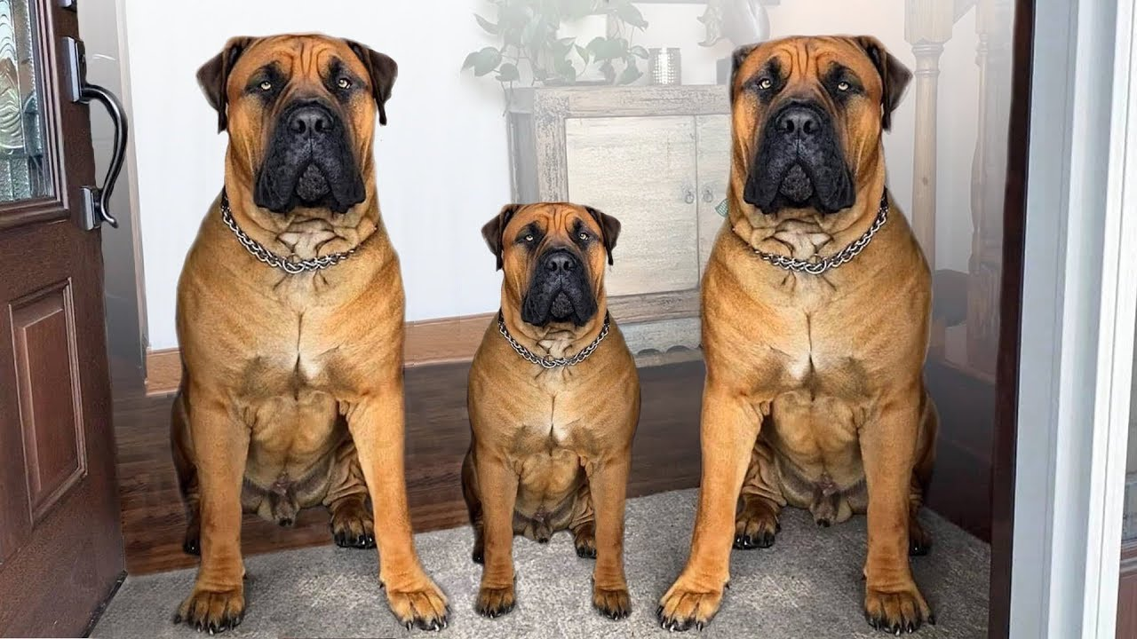 These Are 10 Best Indoor Dog Breeds - YouTube